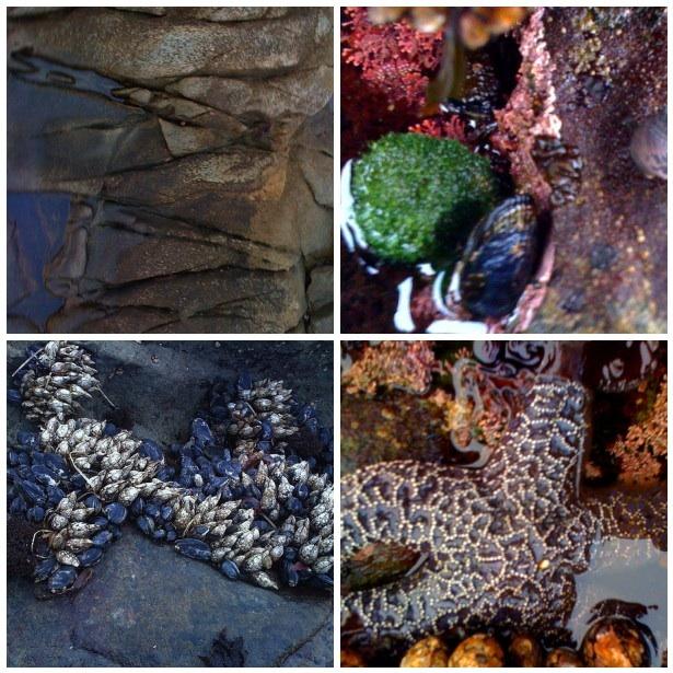 Oceantexture mosaic