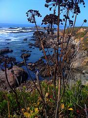 Ocean contrast weed