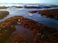Title ocean Oct4