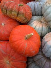 Title pumpkin photo