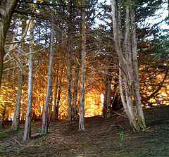 Burning forest 2