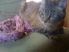 Bodhi lavender yarn