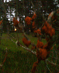 Rusted branch