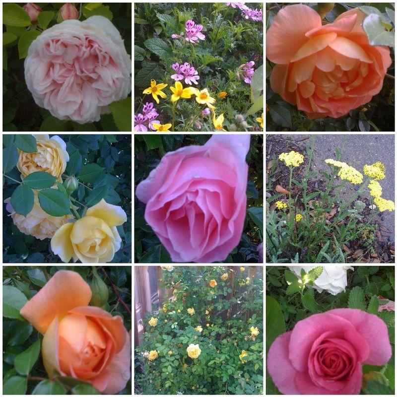Rose Mosaic 2