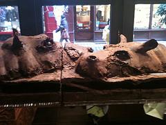 Chocolate hippos