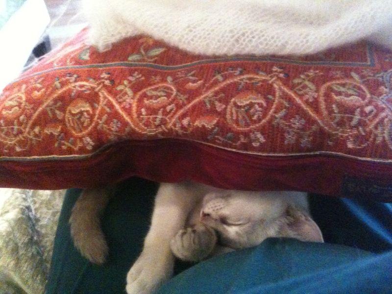 Miro under pillow 1