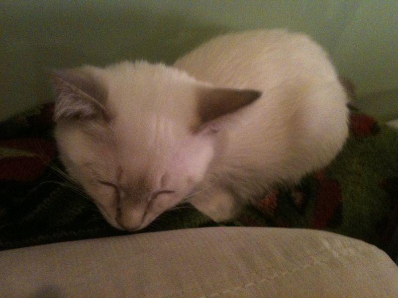 Manju with wrap asleep