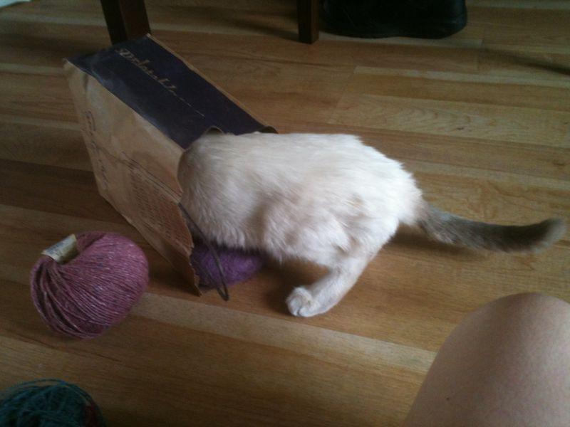 Miros head in a yarn bag