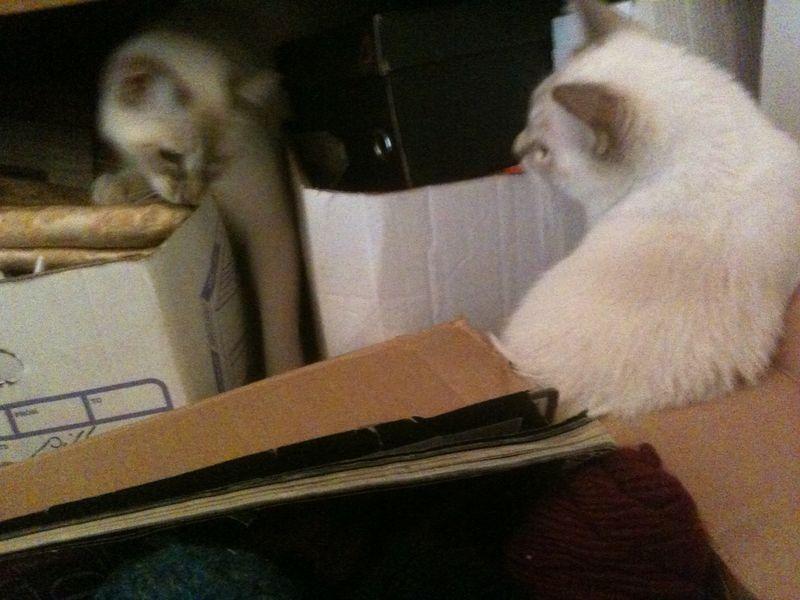 Best kitten box photo