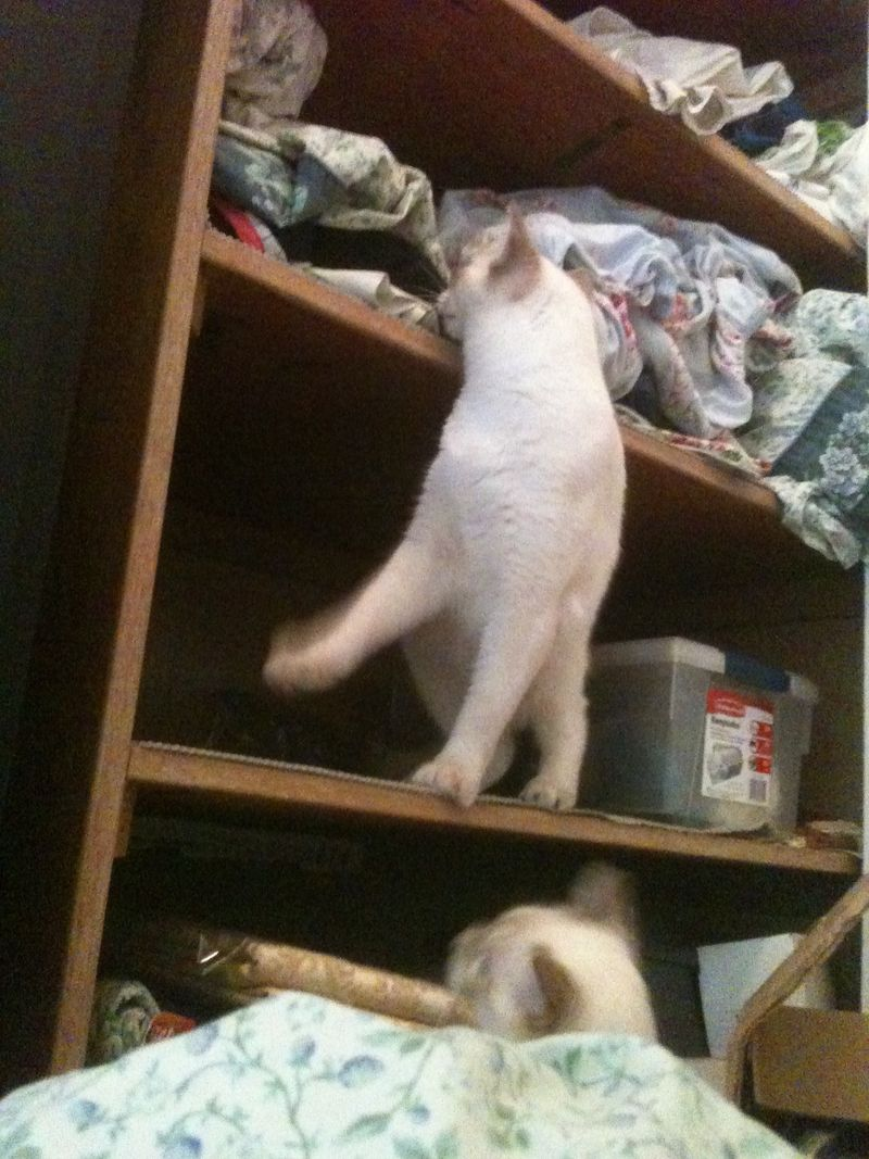 Climbing shelves