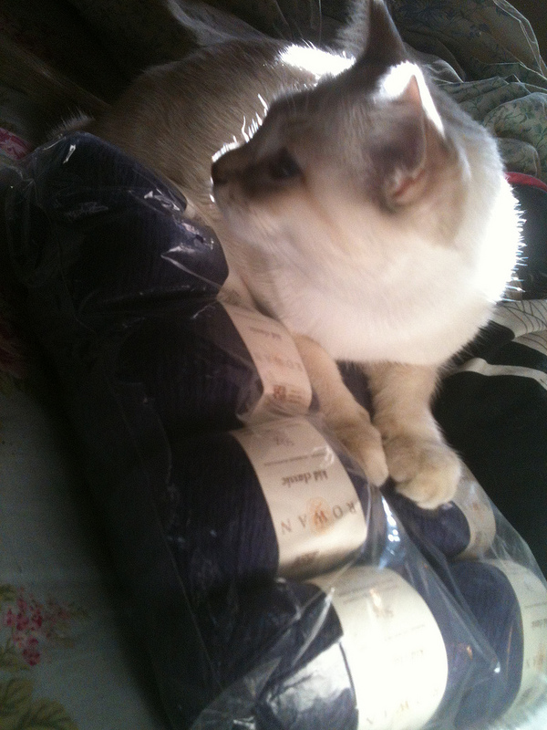 Manju with yarn 1
