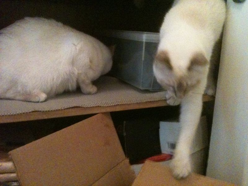 Manju reaches for box