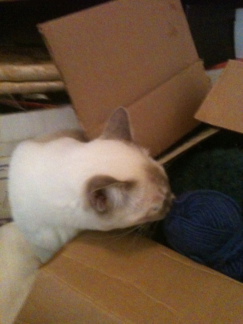 Miro finds yarn box