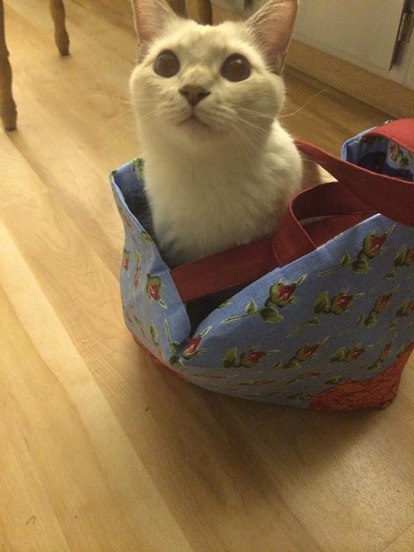 Manju in book bag