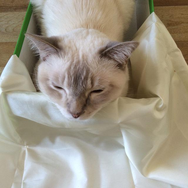 Cat snuggles skirt lining