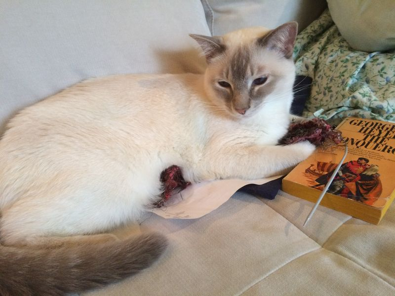 Miro sitting on yarn